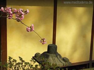Kirschblüten am Teehaus im Japanischen Garten Kaiserslautern