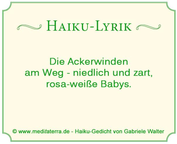 Haiku-Gedicht über die Ackerwinde - Vergleich mit Babys - Ackerwindenblüten