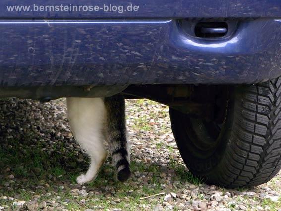 Katzenbeine und getigerter Schwanz einer weißen Katze unter einem blauen Auto - Kiesweg