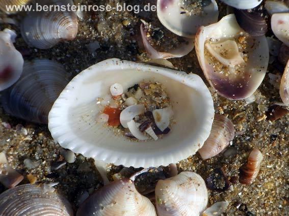 Weiße Muschel mit Muschelstücken und Sand gefüllt und weitere Muscheln im Sand