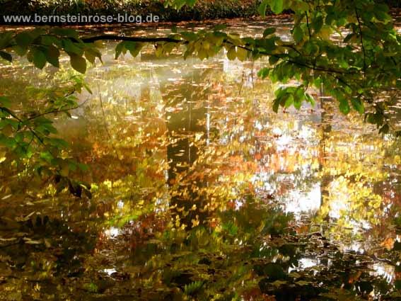 Herbstliche Spiegelung auf der Wasseroberfläche eines Teiches - Bäume und Herbstblätter