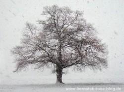Eichenbaum im Winter: Schneeflocken, Wind, kahler Eichenbaum