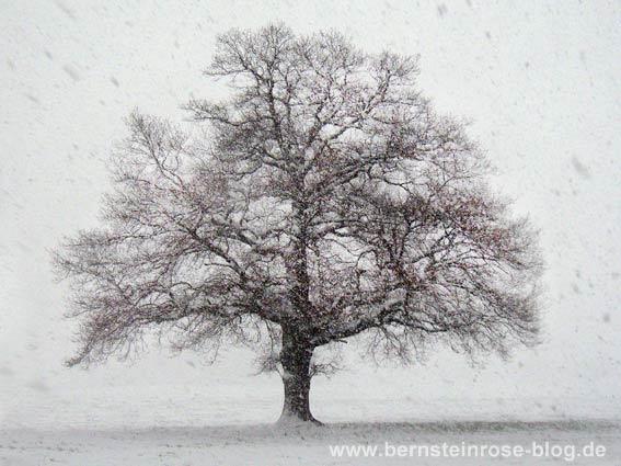 eichenbaum schneeflocken reisen mit mu e entspannt leben. Black Bedroom Furniture Sets. Home Design Ideas