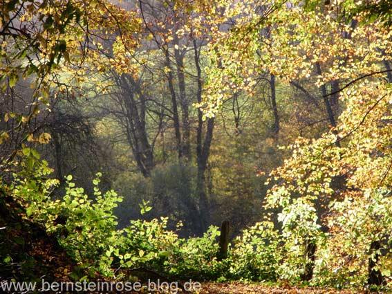 Sonniges Herbstbild mit Herbstzweigen, Bäumen und Tal