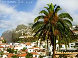 Madeira: Palme und Camara de Lobos im Hintergrund