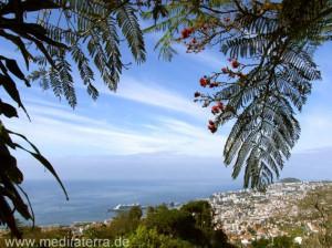 Madeira - Panoramablick auf Funchal