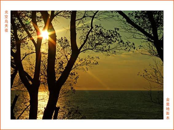 goldenes Meer mit Sonne und Bäumen