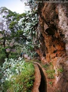Subtropische Vegetation auf Madeira