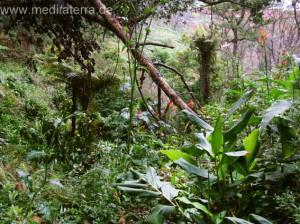 Insel Madeira - subtropische Vegetation