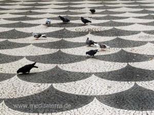 Madeira - Tauben auf dem Pflaster in Funchal