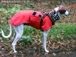 Dalmatinerhund in Nikolaustracht
