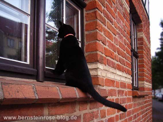 Schwarze Katze am Fenster wie ein Spion
