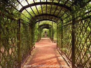 Rosenspalier im Rokokogarten der Dornburger Schlösser