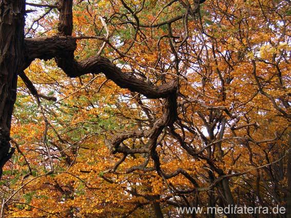 Herbstbäume, Äste