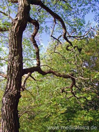 Baum im Frühling, Baumstamm mit Ästen und Frühlingsgrün im Wald