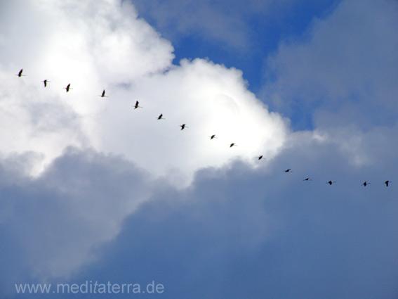 Fliegende Kraniche in den Wolken und Hinmelsblau