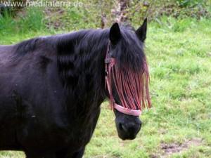 Schwarzes Pferd mit verdeckten Augen auf einer Wiese - Pferdekopf und Hals
