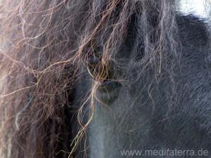 Brünetter Pferdekopf mit lockigem Pferdehaar und Pferdeauge
