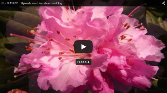 Thumbnail Rhododendronvideo