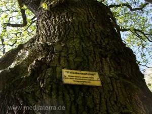 Friedenseiche am Aufstieg zum Rheinsteigweg bei Leutesdorf