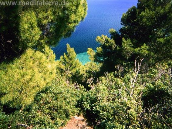 Grüne Natur auf der Insel Alonissos mit Blick auf das blaue Meer
