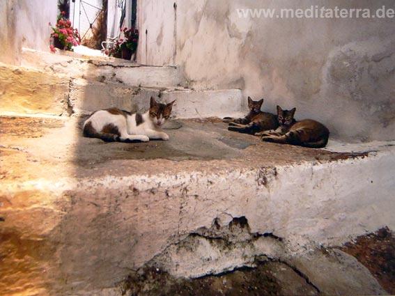 Treppen und Katzen In den Gassen von Skopelos - nördliche Sporaden