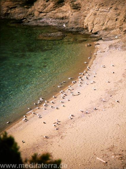 Möwen in der Asselinosbucht auf der Sporadeninsel Skiathos in Griechenland - sandiger Strand