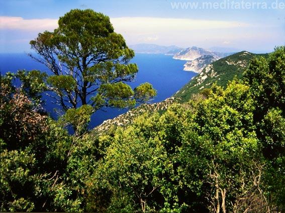 Insel Skopelos: Ausblick auf Meer und Küste