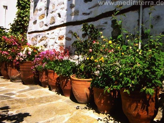 Blumentöpfe mit Blüten in Griechenland