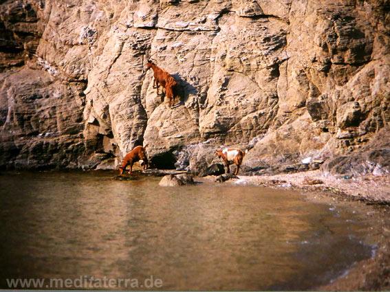 Sporadeninseln - Felsenwand mit Ziegen