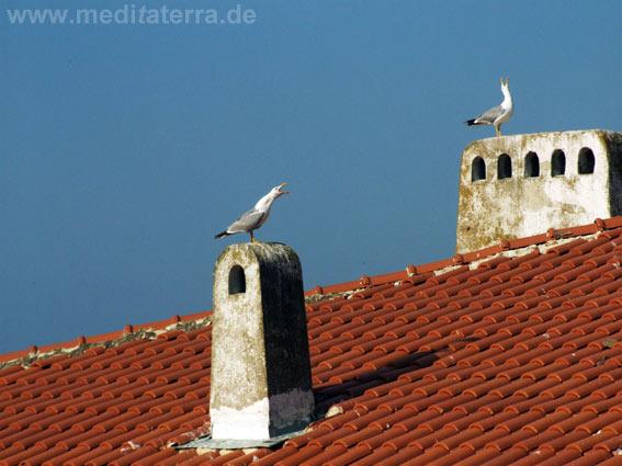 Dach mit zwei alten Schornsteinen und Möwen am Schwarzen Meer in Bulgarien