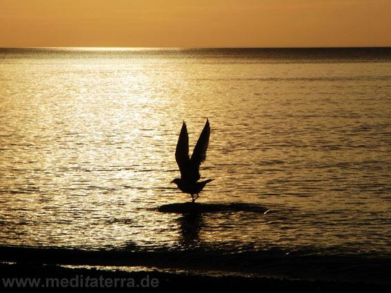 Möwe im Flug bei Sonnenaufgang an der bulgarischen Schwarzmeerküste