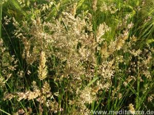 Gräser in allen möglichen Formen