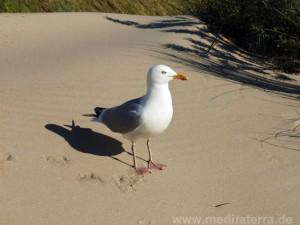 Schatten einer Möwe am Strand, Dünengras