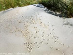 Möwenspuren in den Dünen