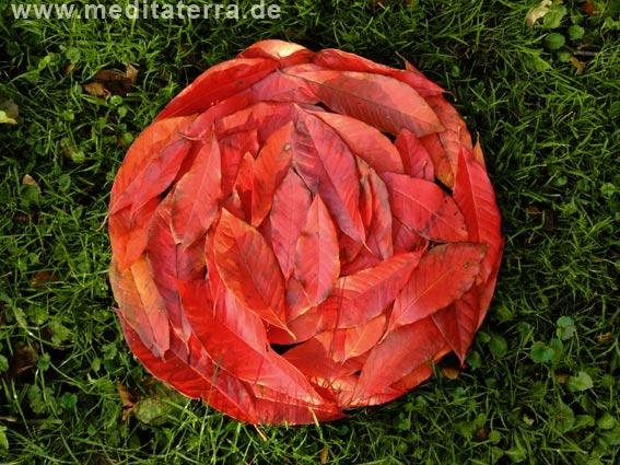 rotes Herbstlauf zu einer Blüte geformt auf grünem Gras