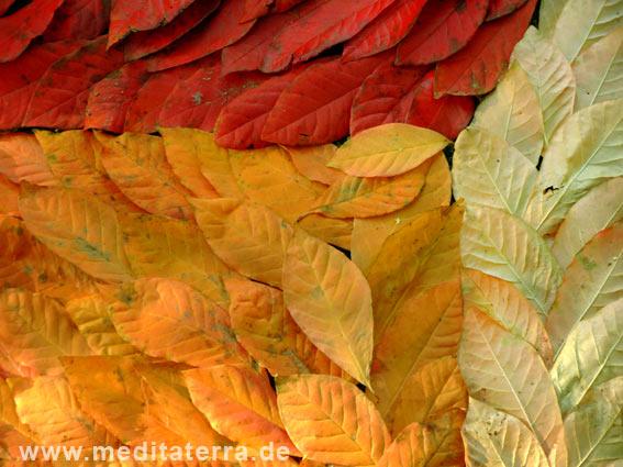 rotes und gelbes Herbstlaub zu einem Bild gelegt
