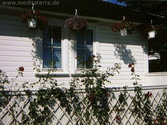 weißes Holzhaus in Norwegen mit Rosen - zwei Fenster