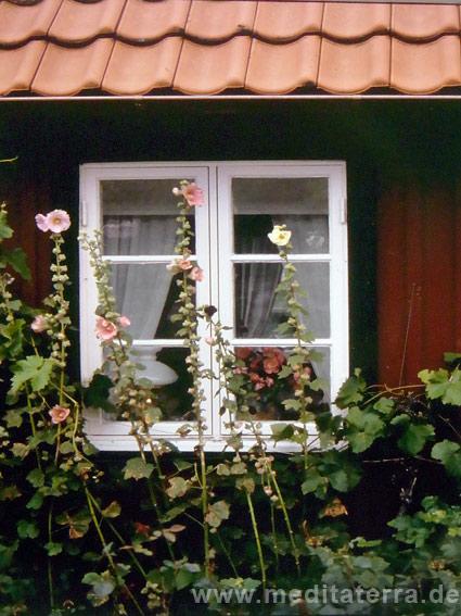 Malvenblüten an einem schwedischen Holzhaus