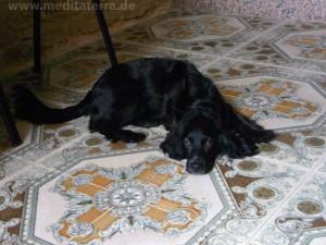 Hund auf Mosaikfußboden
