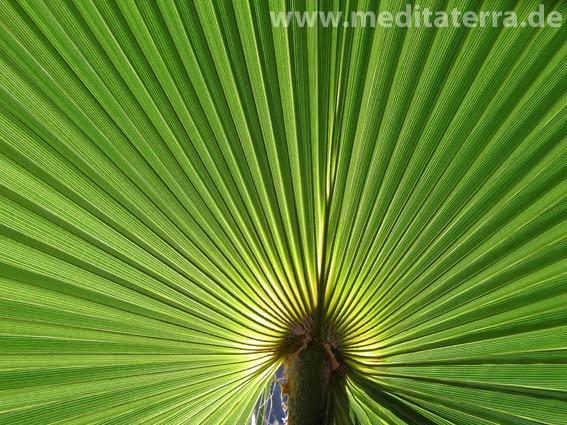 Rätselspiel mit Palmenblatt