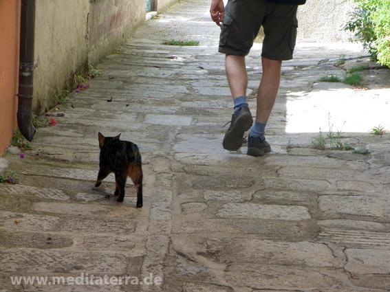 Katze und Spaziergänger in Pflastergasse