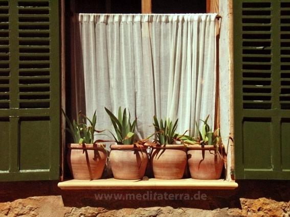 Fenster mit Blumentöpfen - Südeuropa
