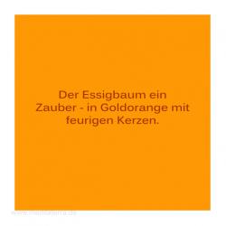 Haiku-Gedicht, . Herbstbaum, . Gabriele Walter