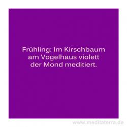 Haiku-Gedicht, Kirschbaum Gabriele Walter
