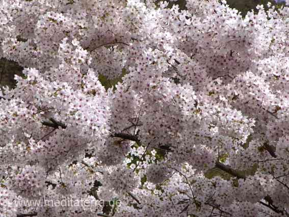 Frühling - Blütenbaum, Asien
