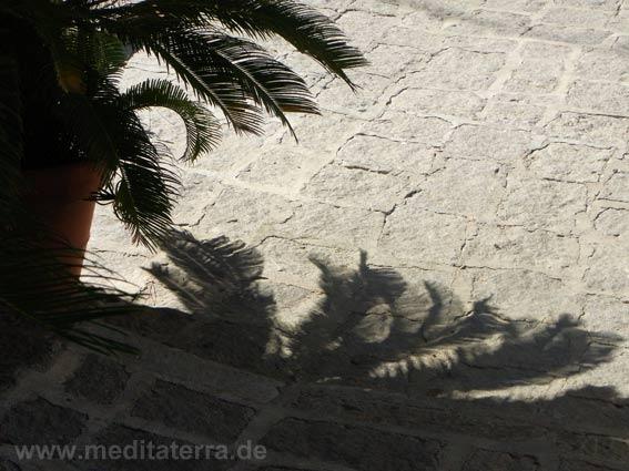 Schattenspiel einer Palme auf altem Pflaster