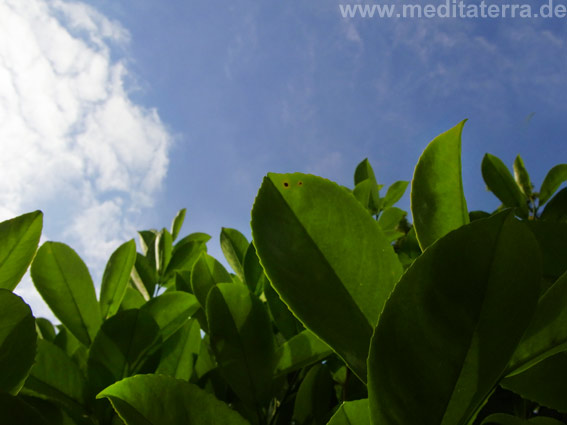 Grün, blauer Himmel, Wolken