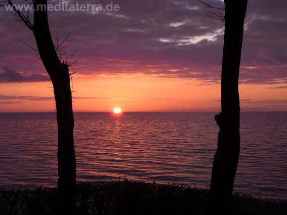 Meer, Morgenrot, zwei Bäume