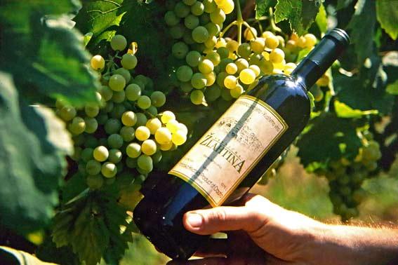 Weingenuss auf der Insel Krk